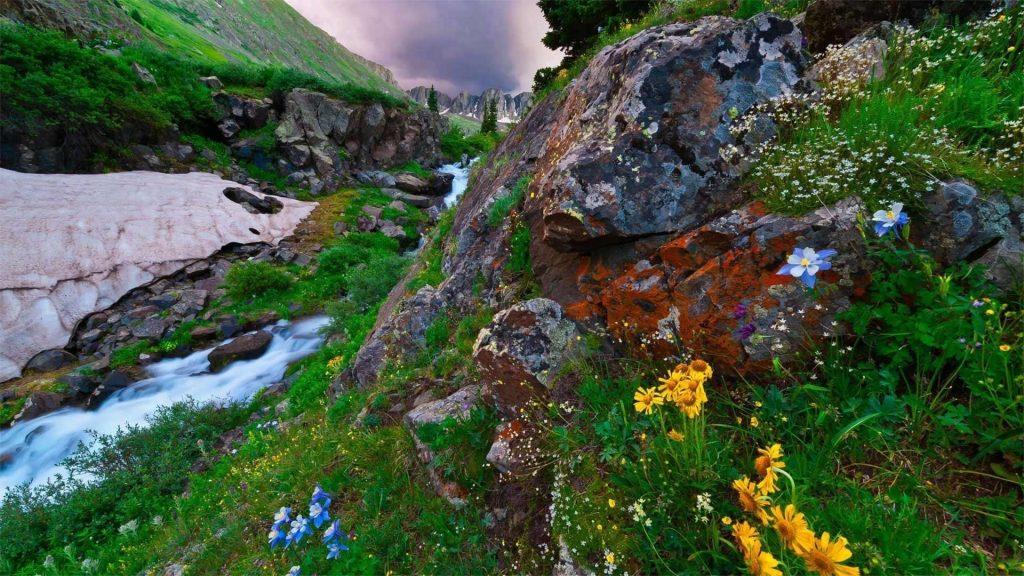 Красивый речной поток на скалах и красочные цветы растения природа обои скачать