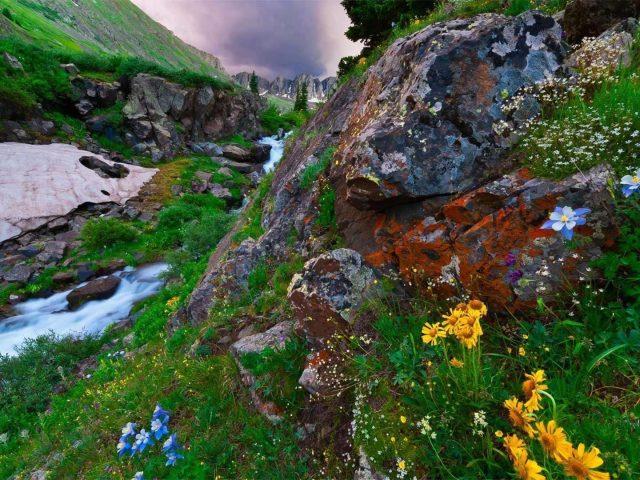 Красивый речной поток на скалах и красочные цветы растения природа