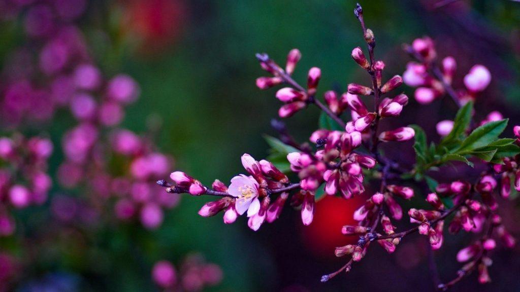 Розовые цветущие цветы на зеленом синем фоне цветы обои скачать