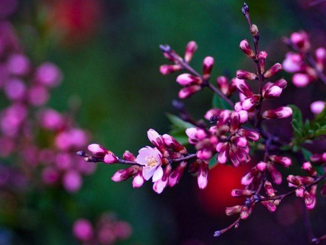 Розовые цветущие цветы на зеленом синем фоне цветы