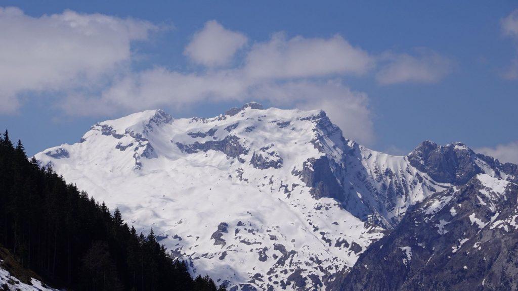 Заснеженные горы лес склон деревья природа обои скачать