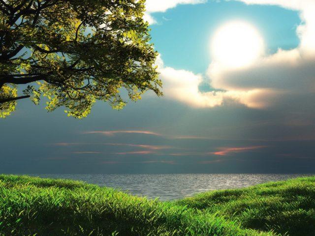 Морской пейзаж закат над водоемом с зеленой травой и деревьями природы