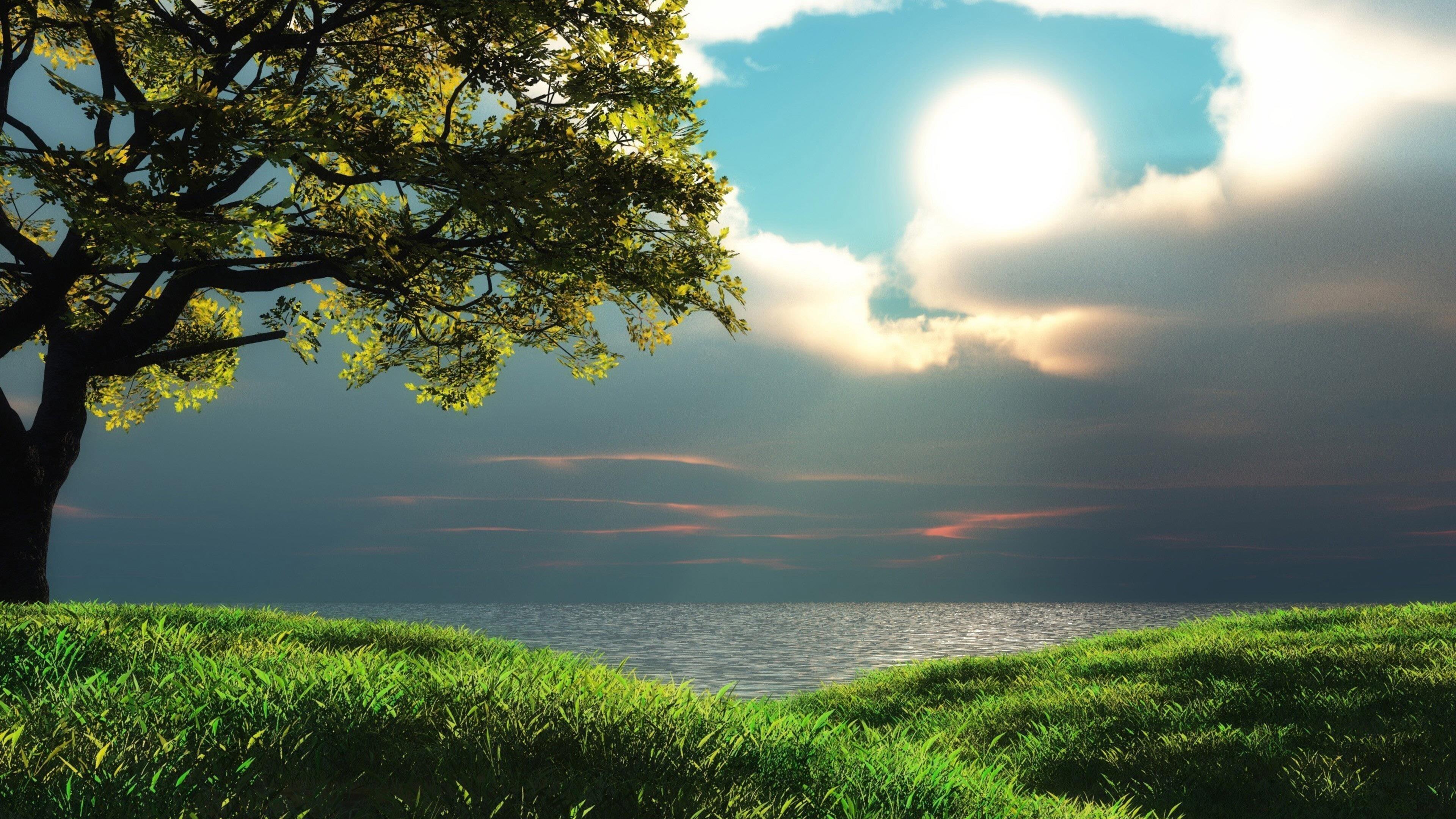 Морской пейзаж закат над водоемом с зеленой травой и деревьями природы обои скачать