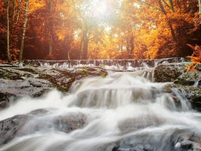 Солнечный свет, проходящий сквозь желтые листья под водопадом природы
