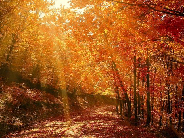 Солнечный свет, проходящий через желтые листья в дневное время природы