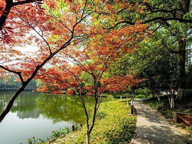 Тропинка между озером и разноцветными деревьями кустарниками растениями солнечными лучами природы