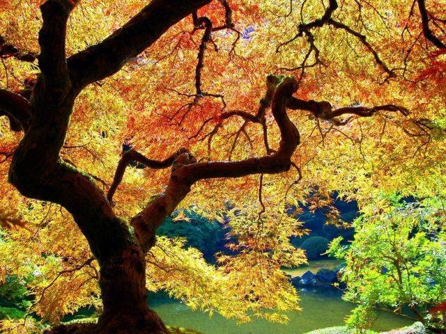 Красочное лиственное дерево в лесу рядом со спокойным водоемом природа