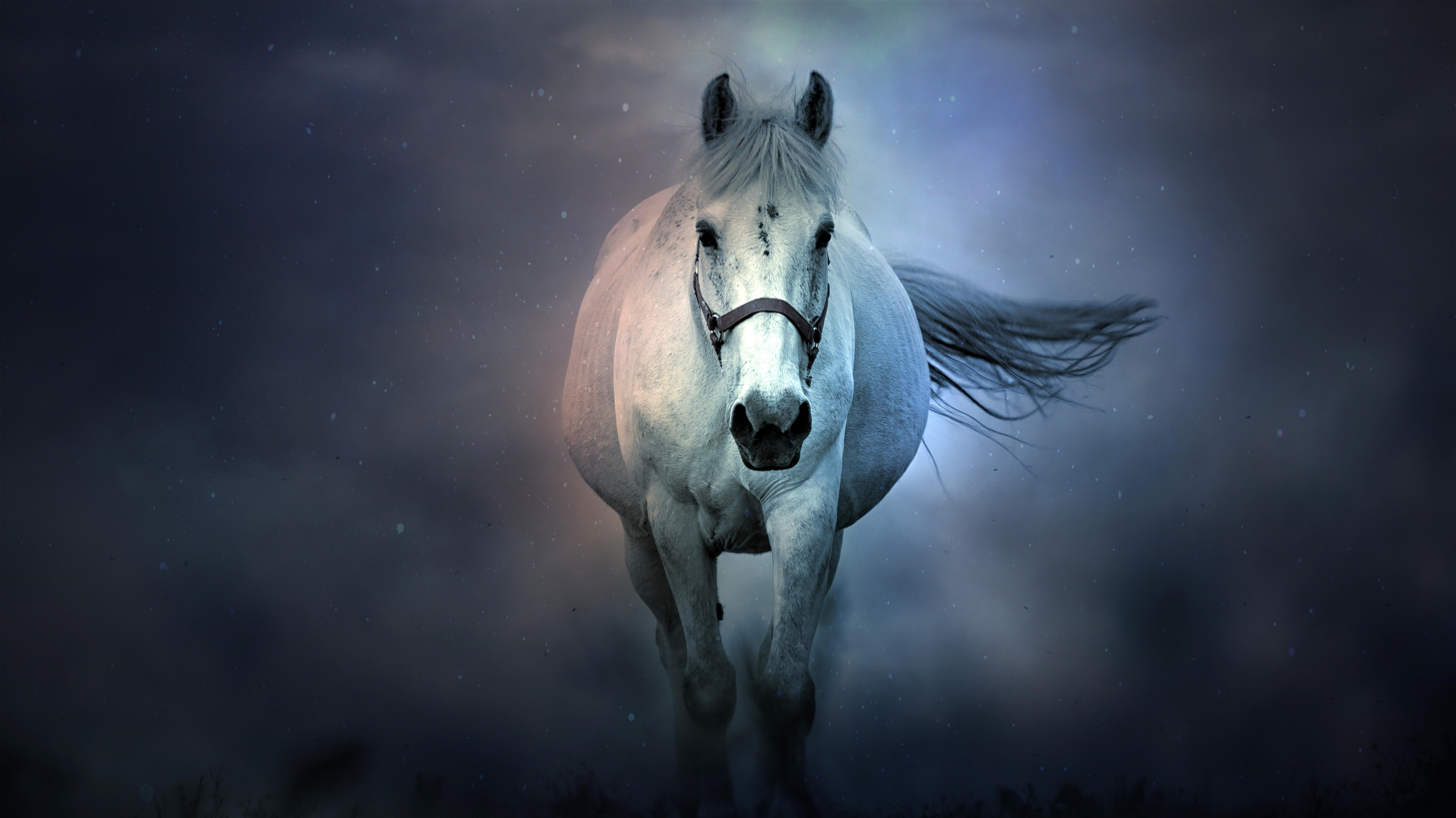 Белая лошадь обои скачать