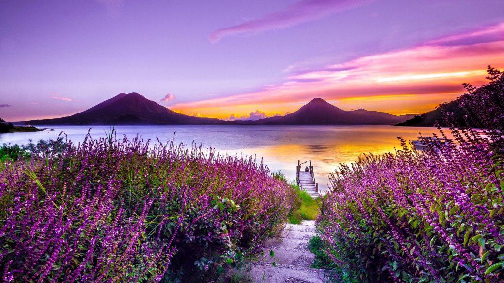 Красивое желто фиолетовое небо над рекой и крупным планом вид на природу цветов лаванды обои скачать