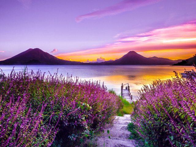 Красивое желто фиолетовое небо над рекой и крупным планом вид на природу цветов лаванды