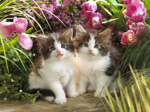 Милые два белых котенка сидят в окружении цветов и зеленых трав животных
