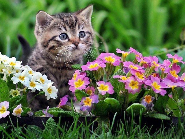 Милый черно — коричневый котенок сидит на зеленой траве рядом с красочными цветами в зеленом размытом фоне животных