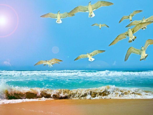 Белые летающие Чайки вблизи водоема в дневное время животные
