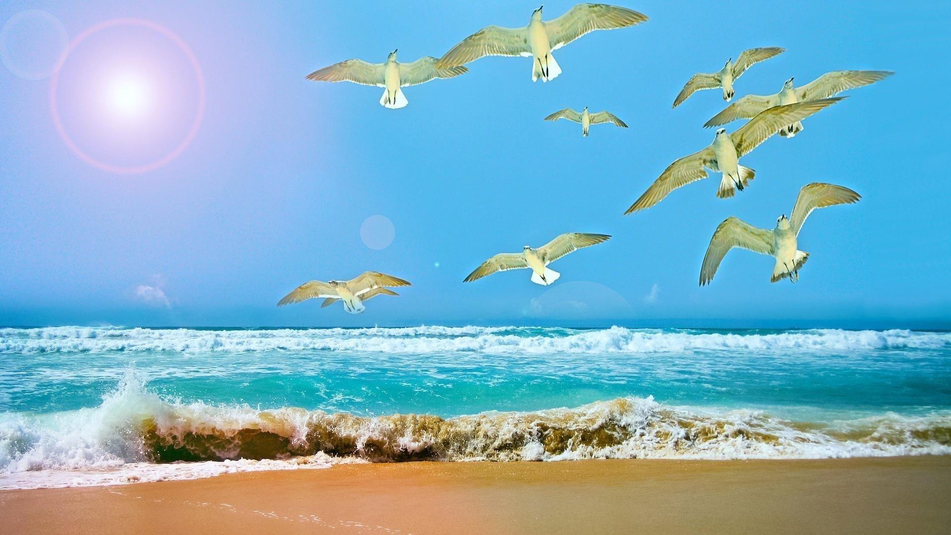 Белые летающие Чайки вблизи водоема в дневное время животные обои скачать