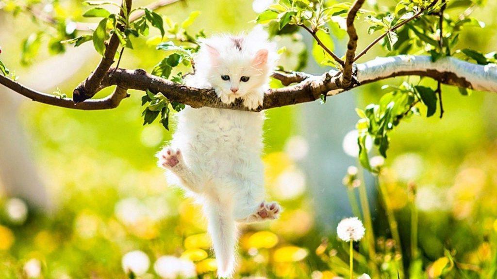 Белый котенок кошки висит на ветке дерева в желто-синих цветах на фоне котенка обои скачать
