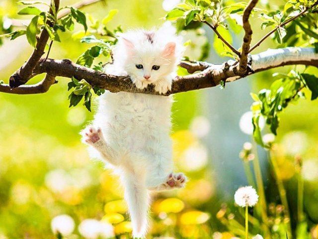 Белый котенок кошки висит на ветке дерева в желто-синих цветах на фоне котенка