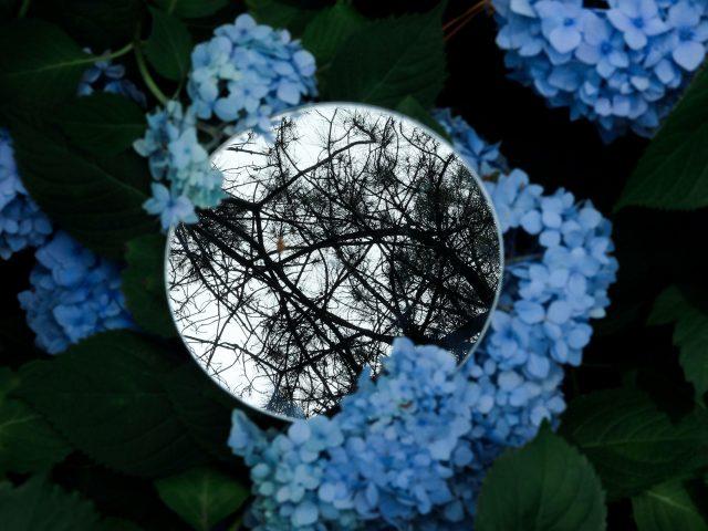 Цветы зеркальные ветви деревья листья