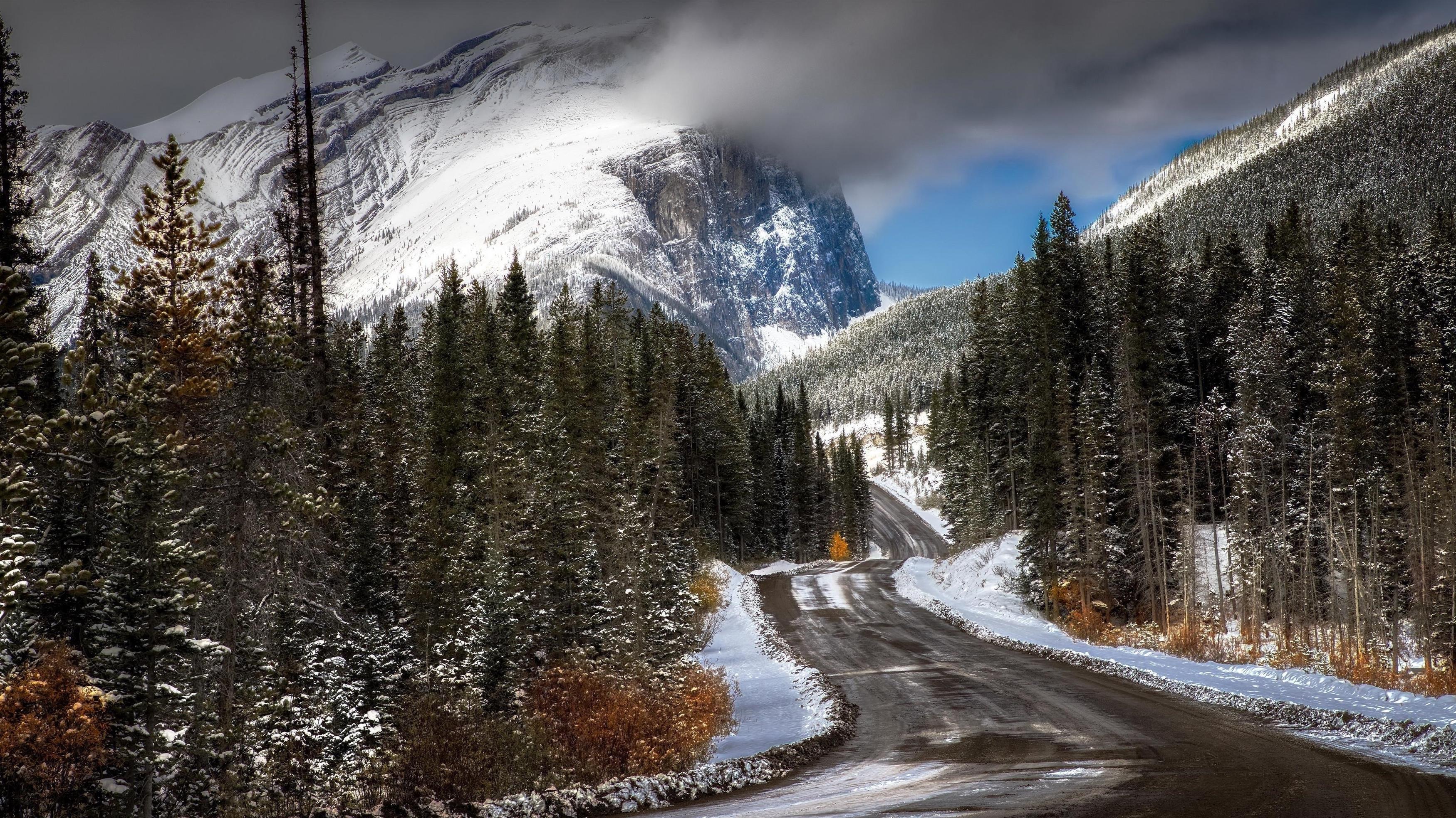 Дорога между заснеженными деревьями с пейзажем заснеженных гор с туманной природой обои скачать