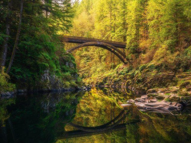 Мост между зелеными деревьями покрытый лесом с отражением речной природы