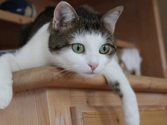 Кошка с зелеными глазами сидит из шкафа кошка