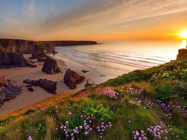 Морское побережье фиолетовые цветы зеленая трава листья поле океанские волны во время заката природа