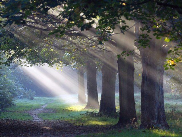 Солнечный свет проходит сквозь зеленые листья и деревья с рукотворной дороги природы