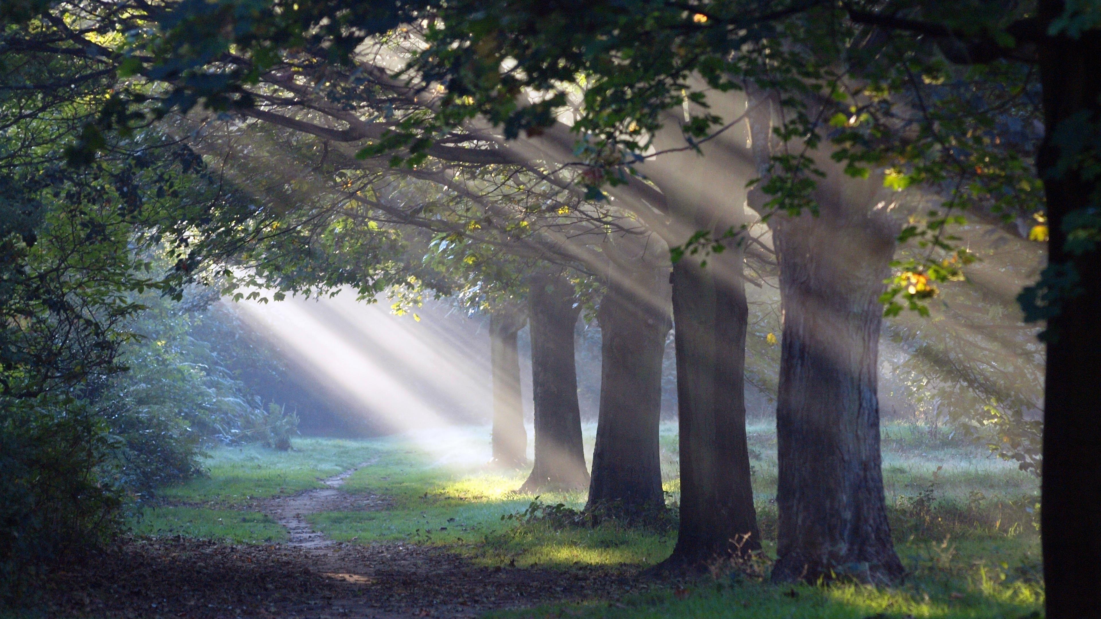 Солнечный свет проходит сквозь зеленые листья и деревья с рукотворной дороги природы обои скачать