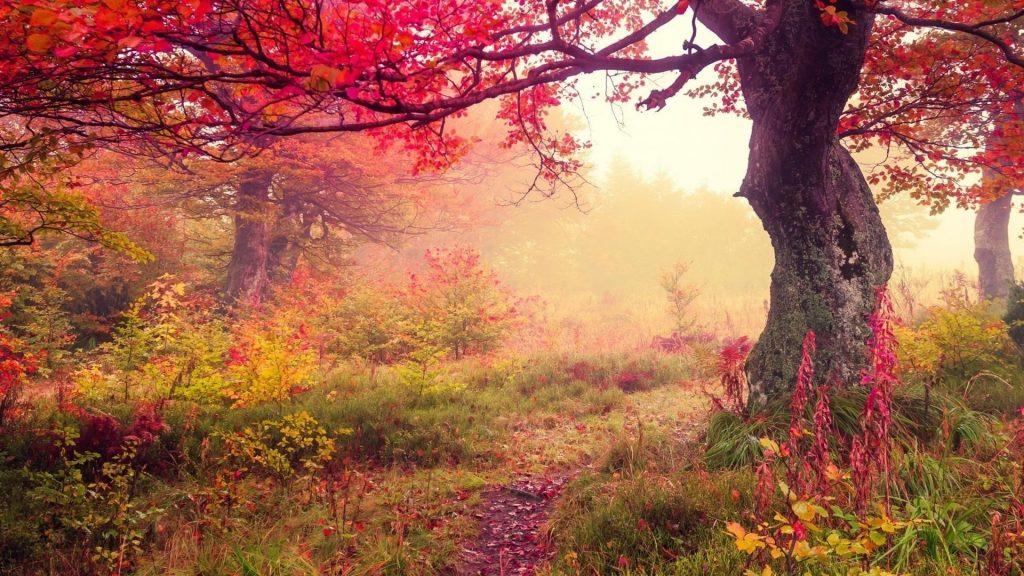 Осенний лес краснолистные деревья и цветы природа обои скачать