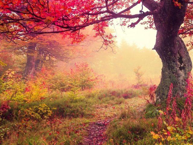 Осенний лес краснолистные деревья и цветы природа