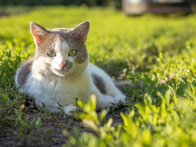 Желтые глаза карие черные милая кошка сидит на зеленых маленьких растениях на фоне солнечных лучей милая кошка