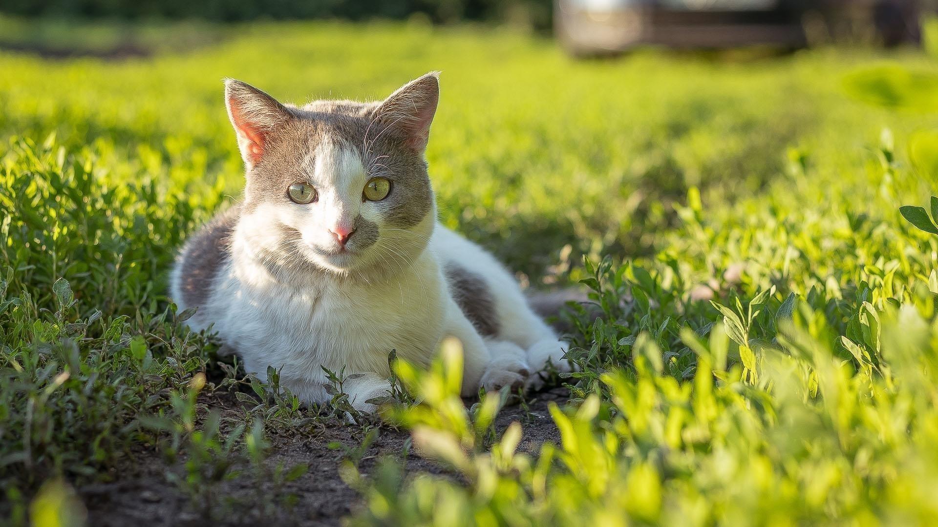 Желтые глаза карие черные милая кошка сидит на зеленых маленьких растениях на фоне солнечных лучей милая кошка обои скачать