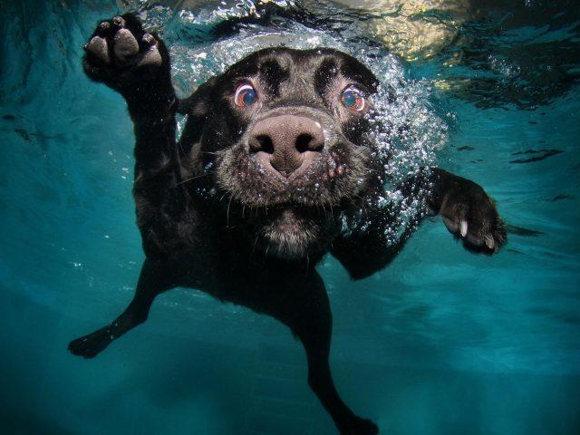 Собака черная под водой