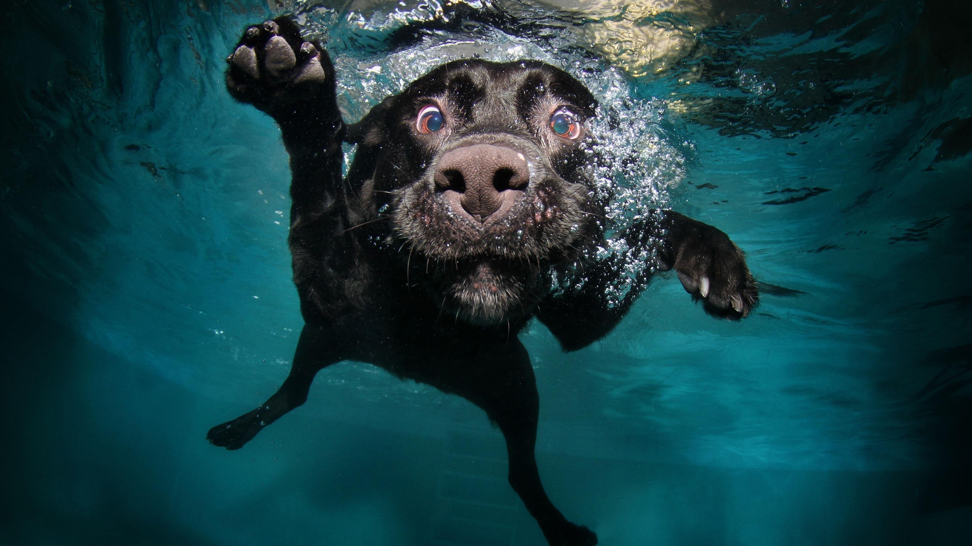 Собака черная под водой обои скачать