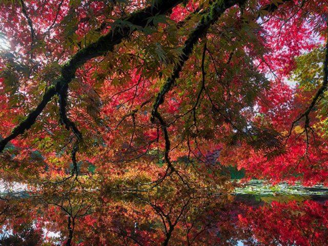 Красно-зеленые осенние листья деревьев отражаются на реке в дневное осеннее время