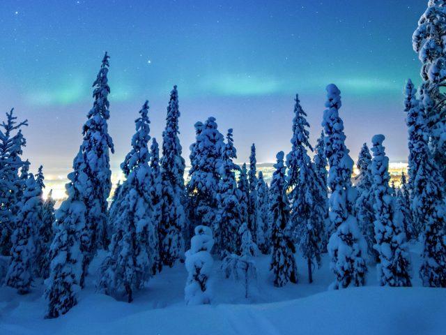 Зимой замороженный лес к