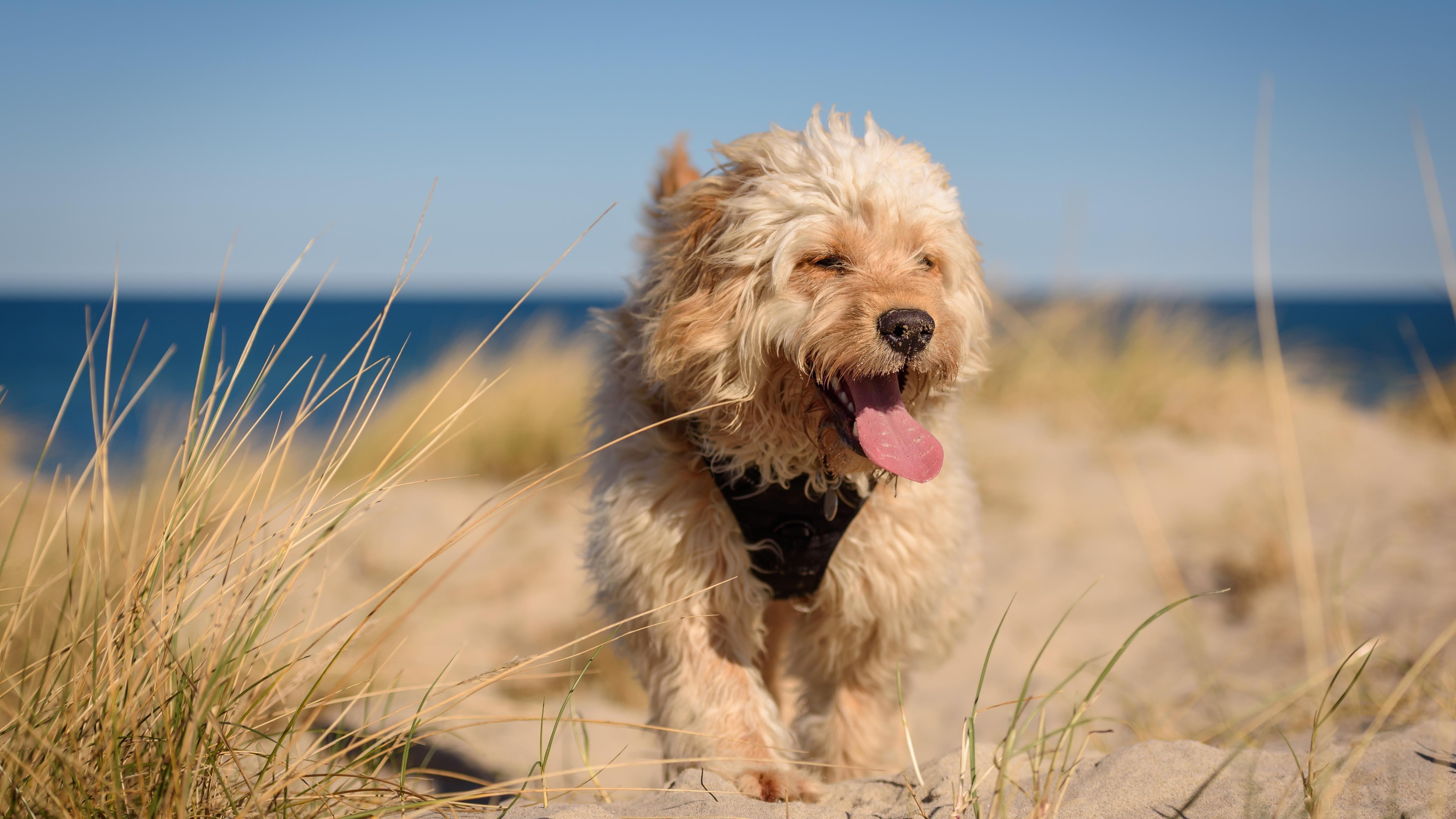 Животное Собака животные обои скачать