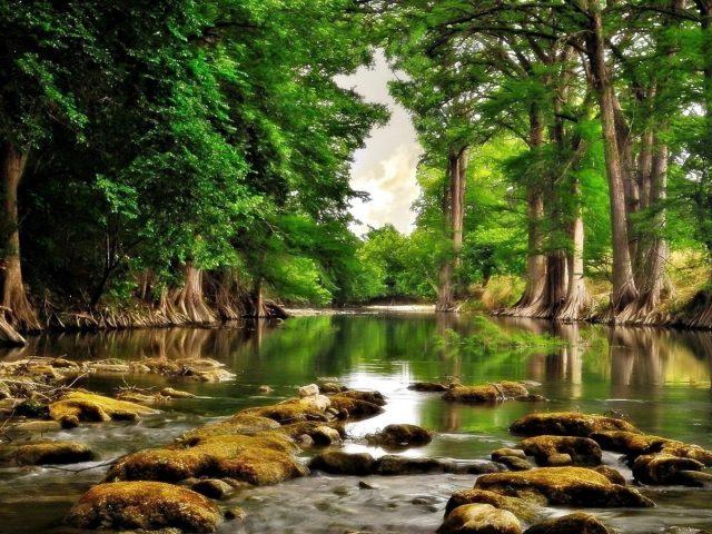 Берег реки камни высокие зеленые деревья листья спокойная вода камни отражение природы
