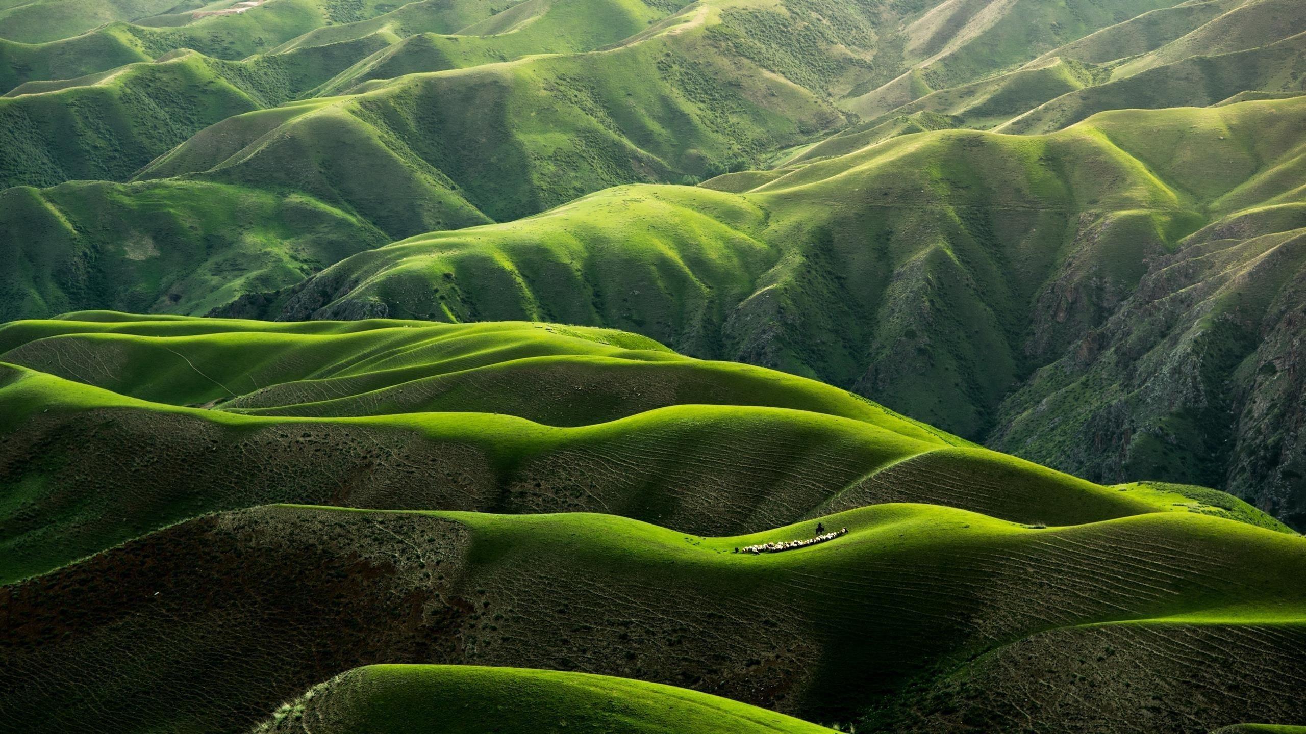 Пастбищных пейзаж обои скачать