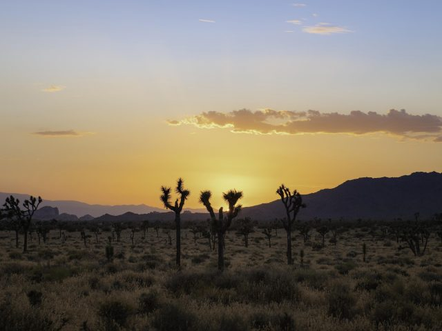 Пустынные кактусы, горы, природа