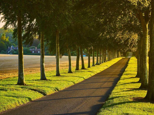 Аллея дорожка деревья газон природа