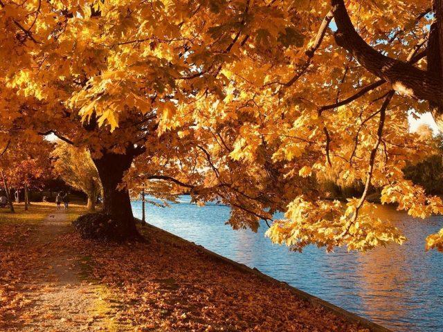 Желтые осенние деревья с листьями у реки в дневное осеннее время