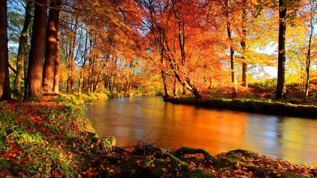 Река между разноцветными деревьями покрыта лесной природой обои скачать