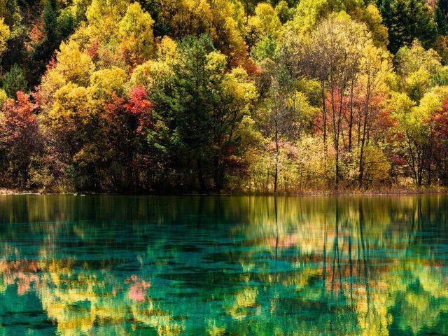 Прекрасный пейзажный вид на разноцветные осенние деревья, отражение на реке в дневное время природы