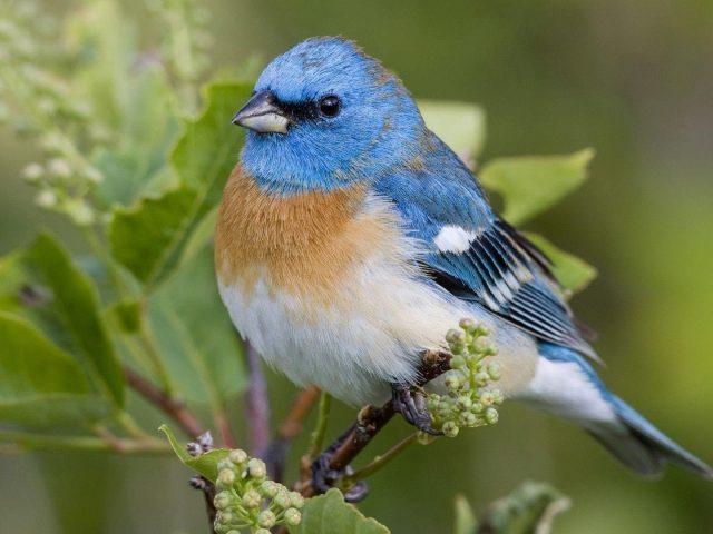 Сине коричневая белая птица стоит на ветке растения птицы