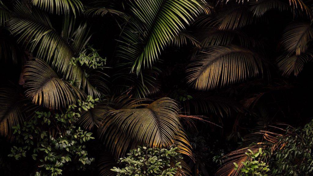 Пальмы листья кусты ветви природа обои скачать