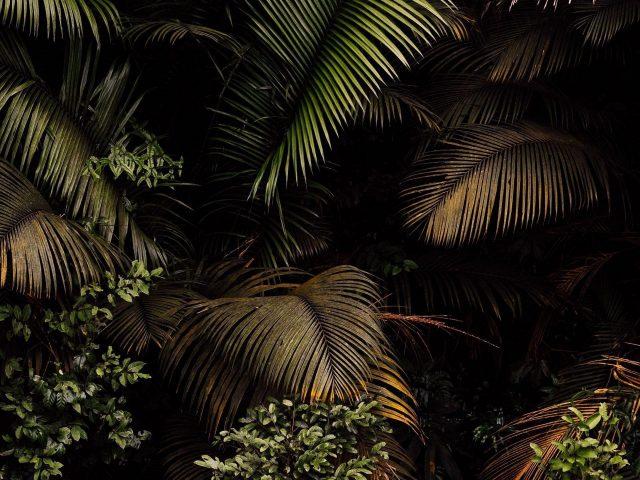 Пальмы листья кусты ветви природа