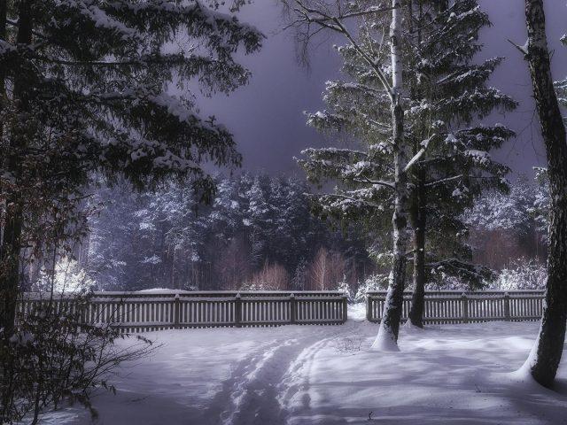 Украина лесная тропинка с забором и заснеженными деревьями во время зимней природы