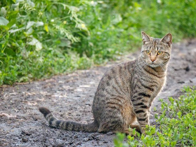 Желтые глаза карие черные сидит на дорожке симпатичная кошка