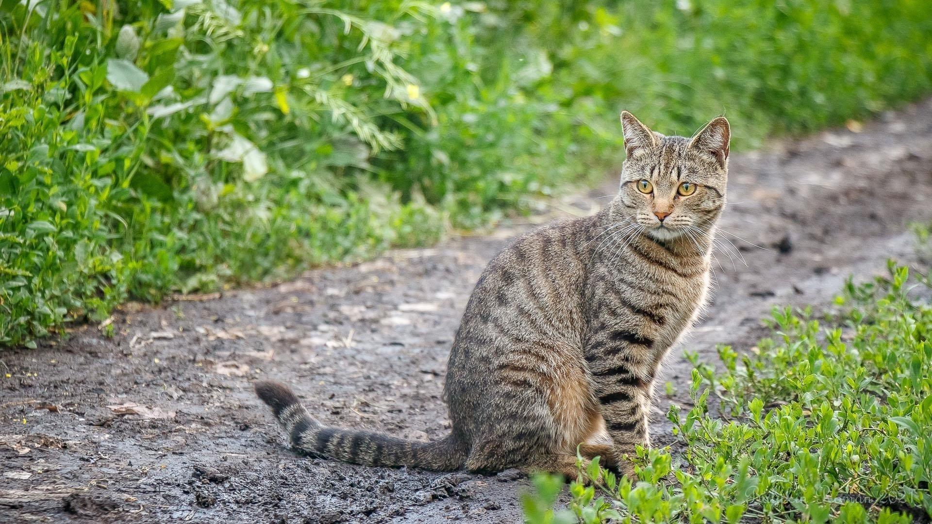 Желтые глаза карие черные сидит на дорожке симпатичная кошка обои скачать