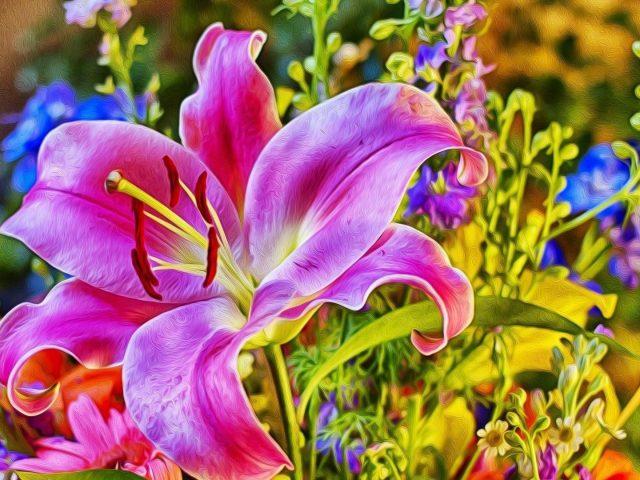 Цветок лилия роза цветы